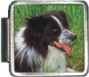 A10016 Border Collie Italian Charm