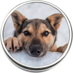 Dog Photo Snap Charm